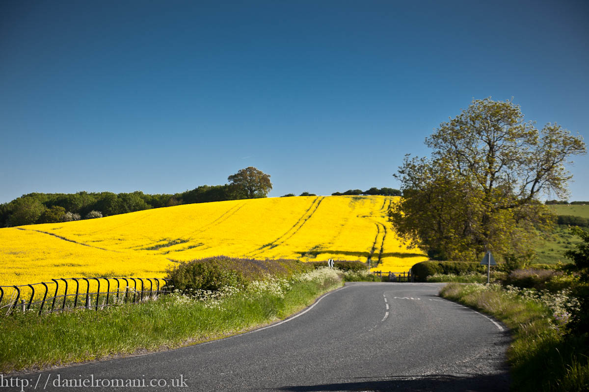 British road and rapeseed fields.